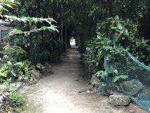 フクギ並木通りの脇道