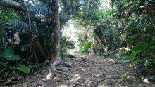 フボー御嶽の入り口