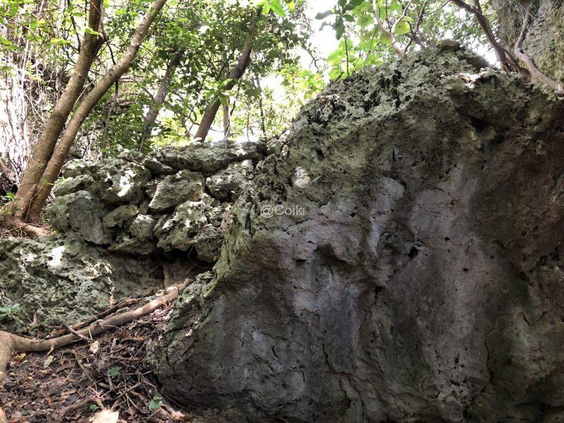 隆起サンゴの巨石