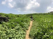 龍神龍王神大神への遊歩道