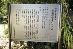 金武観音寺のフクギ
